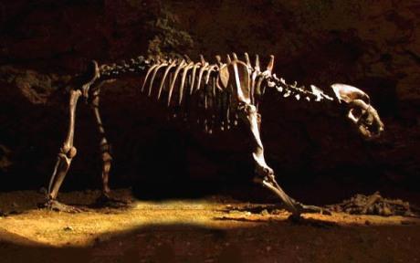 cavebear1